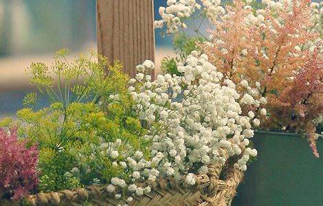 Envío de Flores
